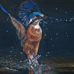 novus art kingfisher jane mason