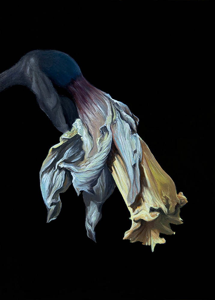 dan green-decayed daffodil on black background from side