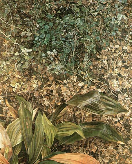 freud two plants