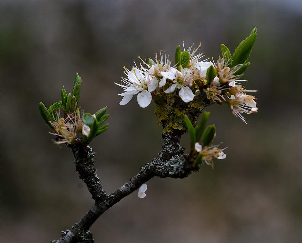 blossom-end