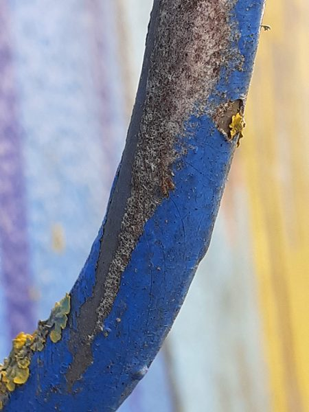 blue-yellow-trunk